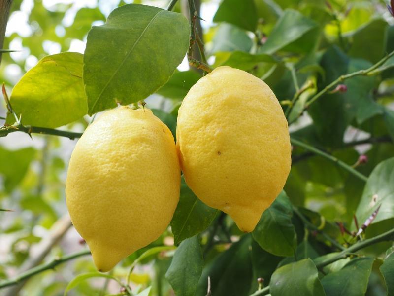 Lemon 1117564 960 720